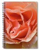Salmon Pink Rose Spiral Notebook