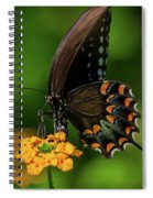 Spicebush Swallowtail On Lantana Blooms Spiral Notebook