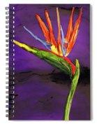 The Bird Spiral Notebook