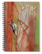 Yellow-bellied Sapsucker 2 Spiral Notebook