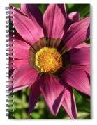 Nice Gazania Spiral Notebook