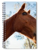 Horse In A Countryside Spiral Notebook