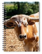 Longhorn Bull In The Paddock Spiral Notebook