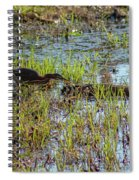 Green Heron Looking For Food Spiral Notebook