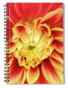 Dahlia 9 Spiral Notebook