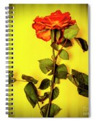 Dying Flower Against A Yellow Background Spiral Notebook