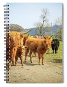 Highland Cattle  Spiral Notebook
