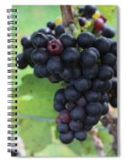 Purple Grape Bunches 17 Spiral Notebook