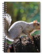 Squirrel Friend Spiral Notebook