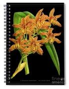 Vintage Orchid Print On Black Paperboard Spiral Notebook