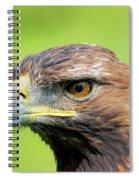 Golden Eagle  Spiral Notebook