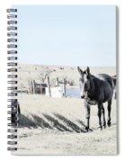 3 Mules Spiral Notebook