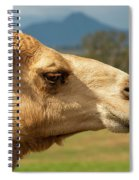 Camel Out Amongst Nature Spiral Notebook