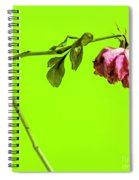 Dying Flower Against A Green Background Spiral Notebook