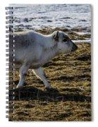 Svalbard Reindeer Spiral Notebook