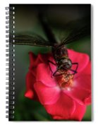 Dragonfly On A Flower Of A Red Rose. Macro Photo Spiral Notebook