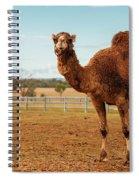 Large Beautiful Camel Spiral Notebook