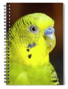 Portrait Of Budgie Birds Spiral Notebook