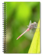 Small Beautiful Dragonfly Spiral Notebook