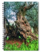 Old Olive Tree Spiral Notebook