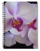 7195-orchids Spiral Notebook