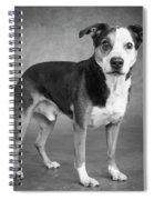 Portrait Of A Mixed Dog Spiral Notebook