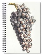 A Bunch Of Grapes By Johan Teyler  1648-1709  Spiral Notebook