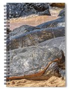 A Couple Of Turtles Stopped By Spiral Notebook