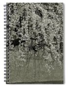 A Single Cherry Tree In Bloom Spiral Notebook