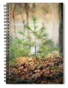 A Tiny Pine Spiral Notebook