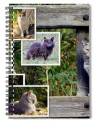 A Variety Of Cats Spiral Notebook