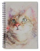 Abyssinian Cat Spiral Notebook