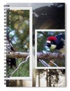 Acorn Woodpecker Spiral Notebook