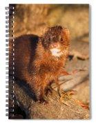 Adorable Mink Spiral Notebook