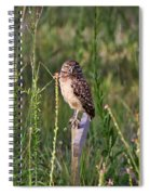 Adult Burrowing Owl Spiral Notebook