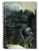 Adult Silverback Gorilla Laying Down With Anguished Expression Spiral Notebook