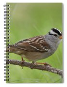 adult White-crowned Sparrow Spiral Notebook
