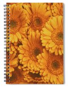 Amber Soaked Spiral Notebook