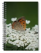 American Copper On Queen Anne's Lace Spiral Notebook