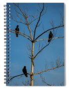 American Crows In Bare Tree Spiral Notebook