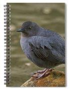 American Dipper, Sierra County California Spiral Notebook