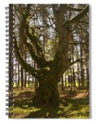 ancient tree in forest near Greenlawin Scottish Borders Spiral Notebook