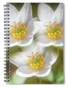 Anemone Nemorosa 2 Spiral Notebook