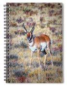 Antelope Buck 2 Spiral Notebook