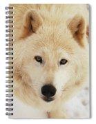 Arctic Wolf Spiral Notebook