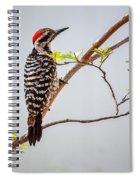 Arizona Ladderback Woodpecker Spiral Notebook