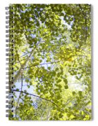 Aspen Canopy With Sun Flare Spiral Notebook