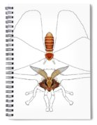 Atlas Moth1 Spiral Notebook