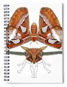 Atlas Moth4 Spiral Notebook