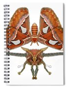 Atlas Moth5 Spiral Notebook
